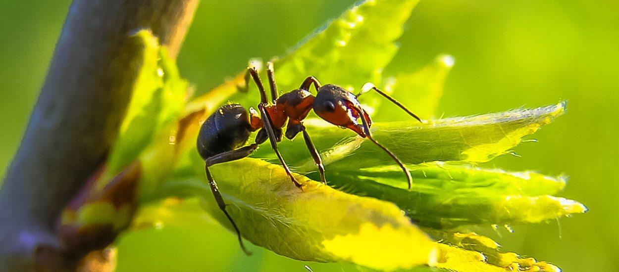 El Fascinante Mundo De Las Hormigas y Su Trabajo En Equipo