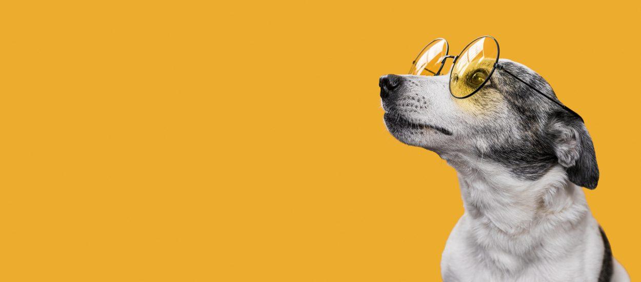 ¡Mejora El Cuidado De Tu Perro!